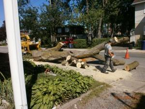 abattage arbre Vertou