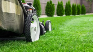 entretien de jardin et espaces vert entreprise Bouaye
